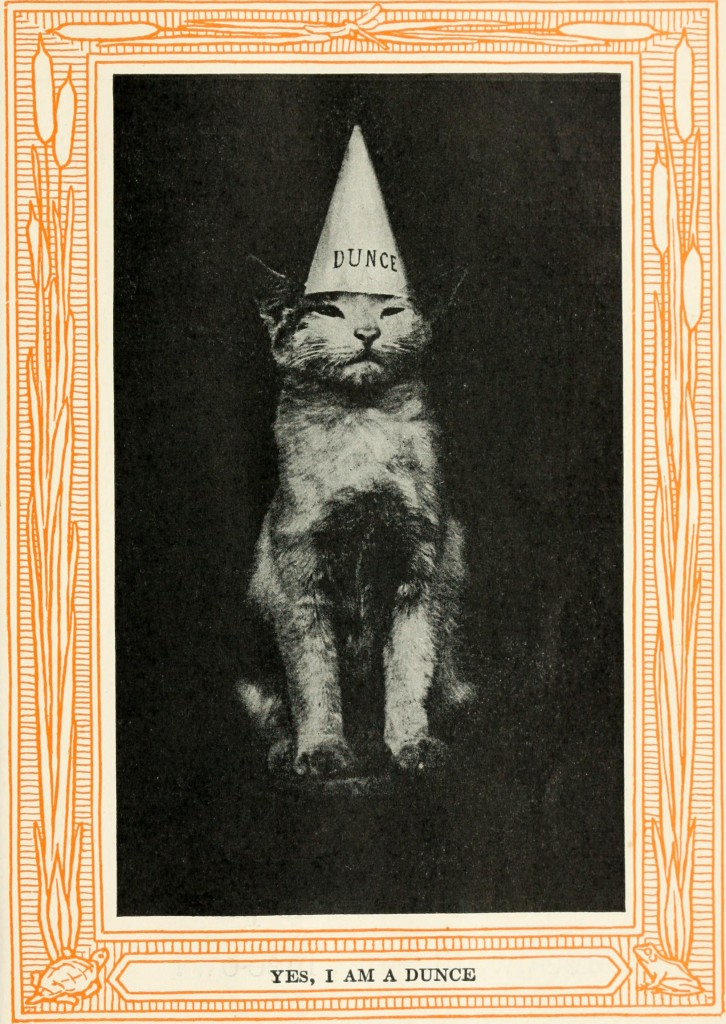 "Image: Eulalie Osgood Grover, from ""Kittens and cats; a book of tales"" (1911)"