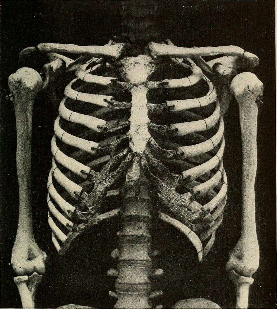 "Image from ""The problem of age, growth, and death"" by Charles Sedgwick Minot, courtesy of Internet Archive Book Images"